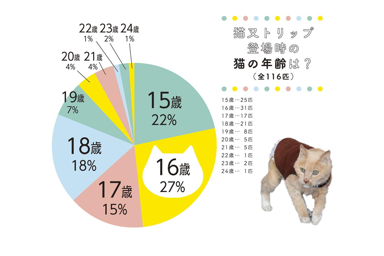 総数116匹のご長寿猫との出会い Vol 2 Br ご長寿猫について知りたい