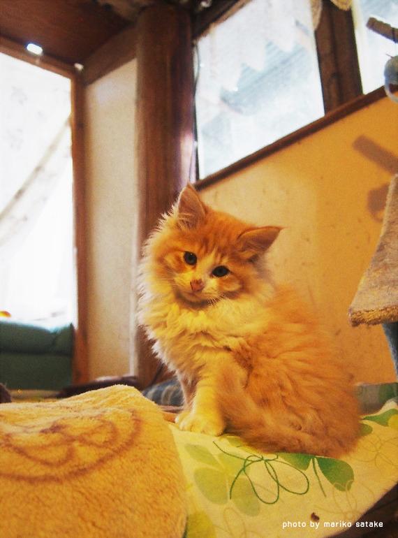 黄色い猫はさみしがりや│フェリシモ猫部