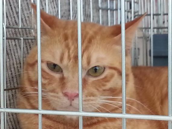 第20回 保護猫の譲渡会のお礼とご報告