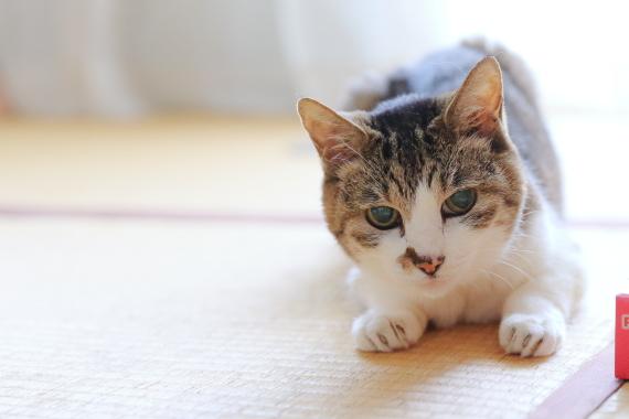 22歳に成長したご長寿猫のパワフルな猫生│フェリシモ猫部